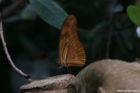 IMG_7193a