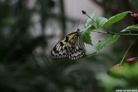 IMG_7210a